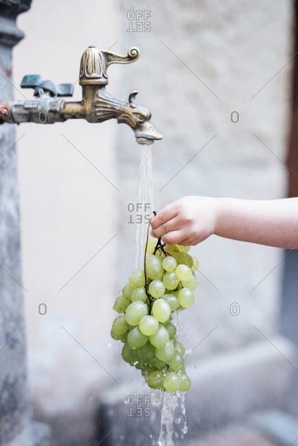Woman washing bunch of white grapes