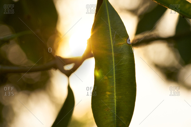 Sun rays shine through tree leaves