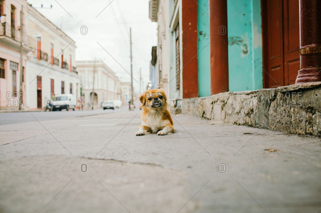 Dog with an under bite on street of Cienfuegos, Cuba