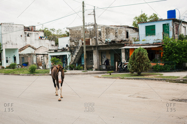 September 16, 2015 - Cienfuegos, Cuba: Horse walking alone on residential street