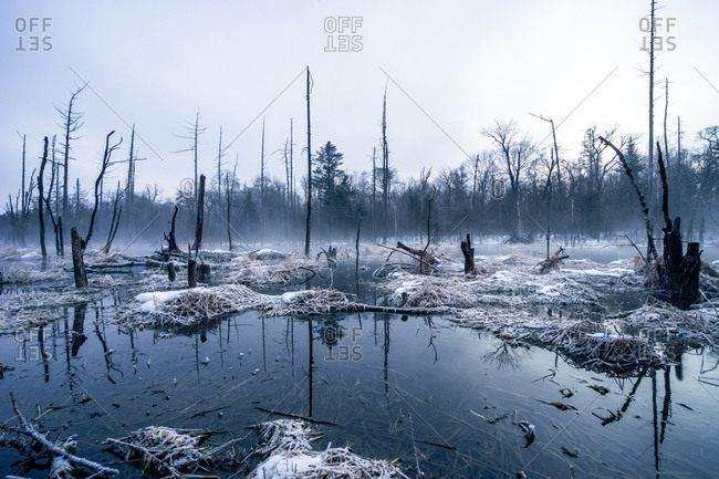 Swamplands in winter, Jilin, China