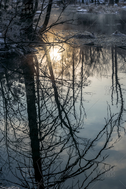 Sun reflected off swamp water in winter