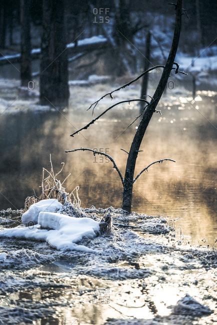 Marsh in winter at dusk