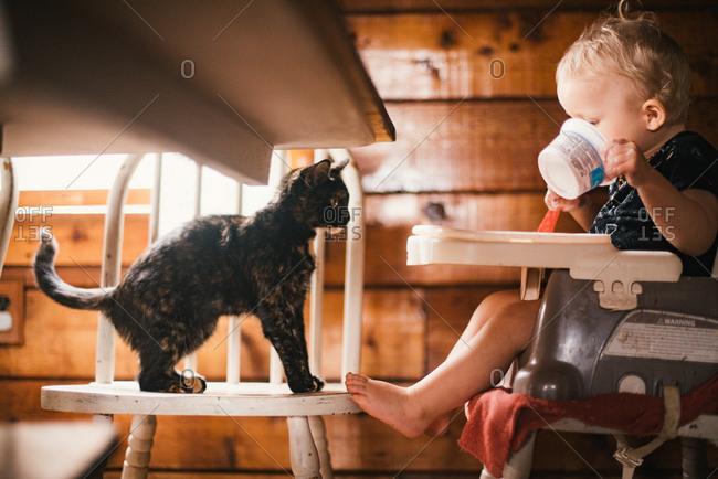 Cat watching baby boy eating a snack