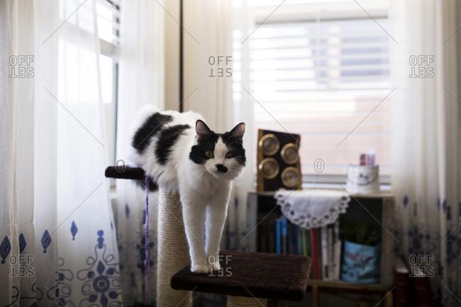 Cat climbing on tower