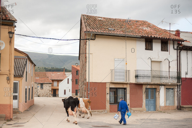 Extremadura, Spain - May 27, 2016: Farmer walking through town with two cows