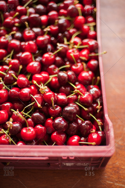 Overhead view of fresh picked cherries