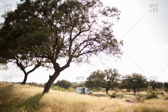 Man and dog camping in the countryside of Extremadura, Spain
