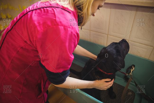 Woman bathing a dog in bathtub