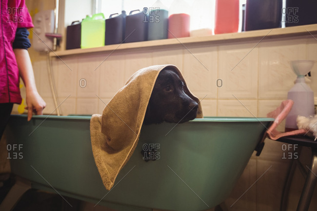 Dog with bath towel in bathtub
