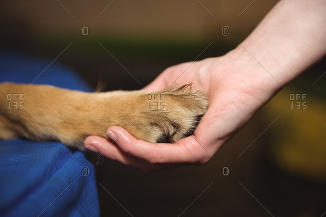 Female hand holding the paw of dog