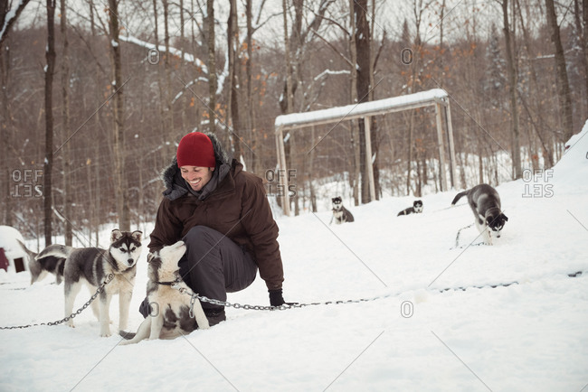 Man petting young Siberian dogs