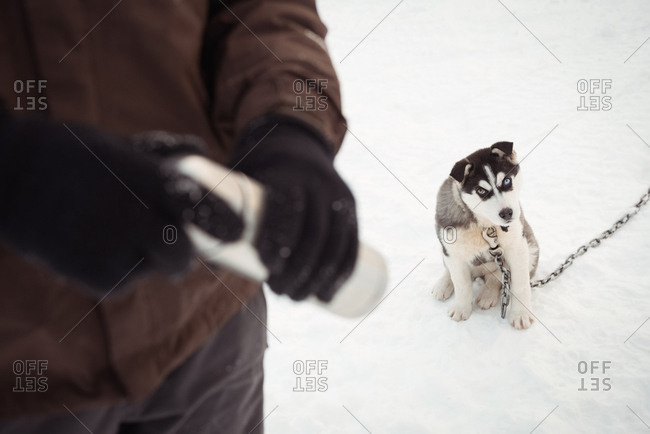 Musher holding thermos while Siberian dog sitting on snow