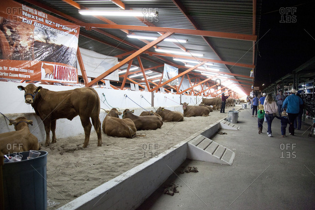 Hermosillo, Mexico - April 26, 2015: People at a cattle exhibition