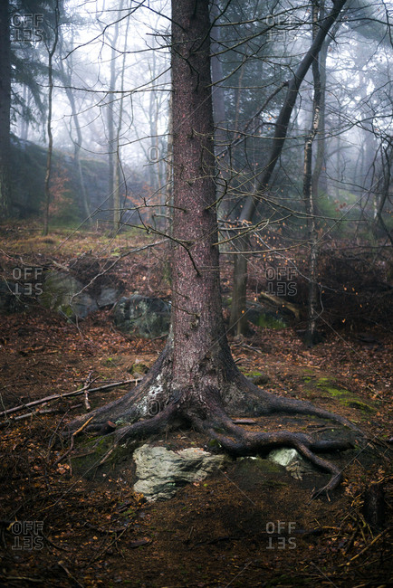 Tree Trunk in a forest