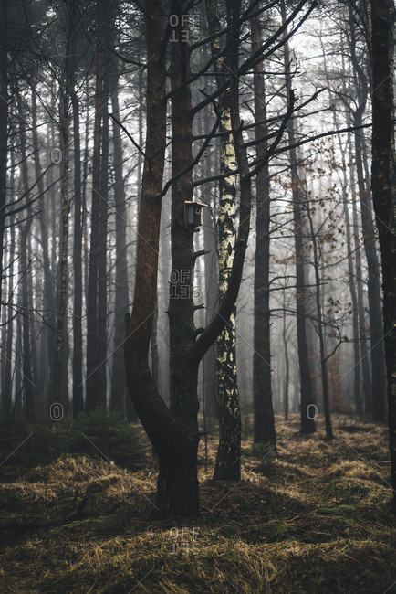 Fog over trees in a forest