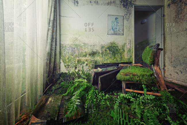 Moss covered chair in abandoned house with ferns growing from the floor