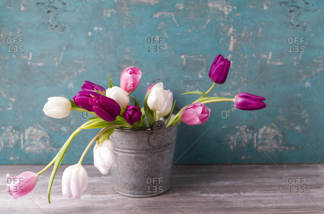 Tulips in a pail