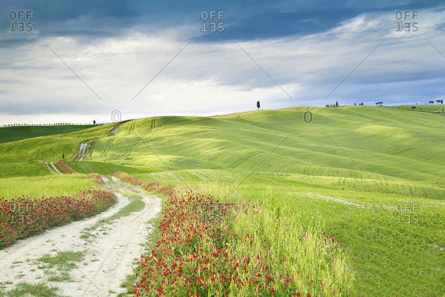 Italy- rolling landscape