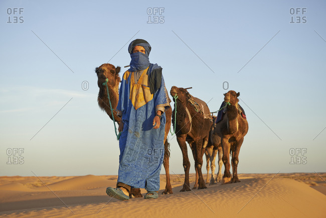 Guide leading camels on sand dune