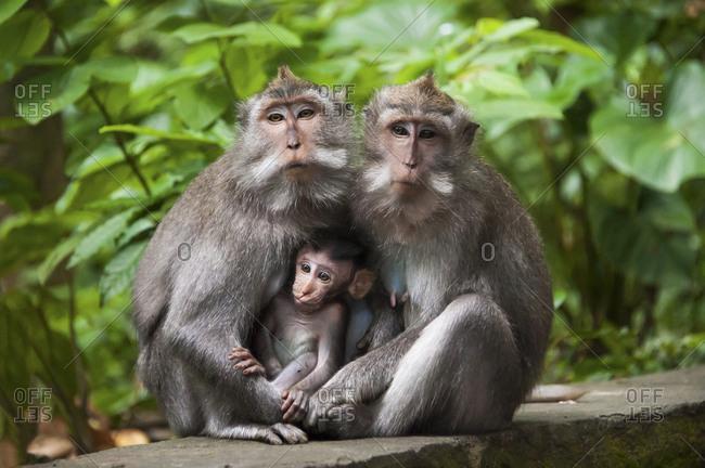 Monkeys sitting on stone banister