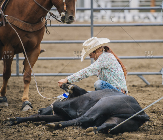 Caucasian cowgirl tying cattle in rodeo