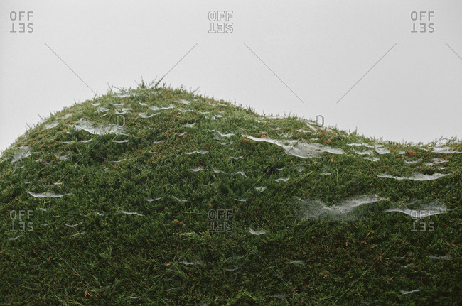 Close up of spider webs on moss