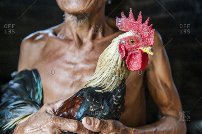 Close up of farmer holding chicken