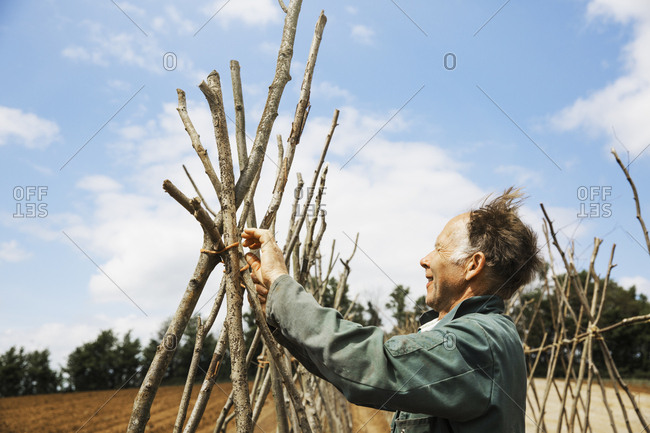 A man tying in poles in a line of bean pole supports.
