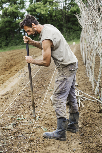 A man using a metal post for making planting holes in soil.