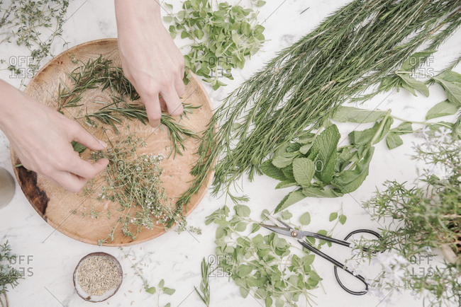 Overhead view of a woman preparing herbs and plants for use in cooking. Rosemary, chives, mint and coriander seeds.