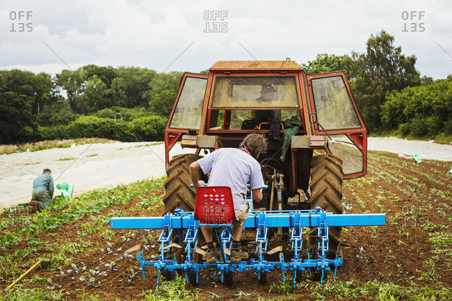 Two men driving a tractor pulling a cultivator weeding between rows of plants.