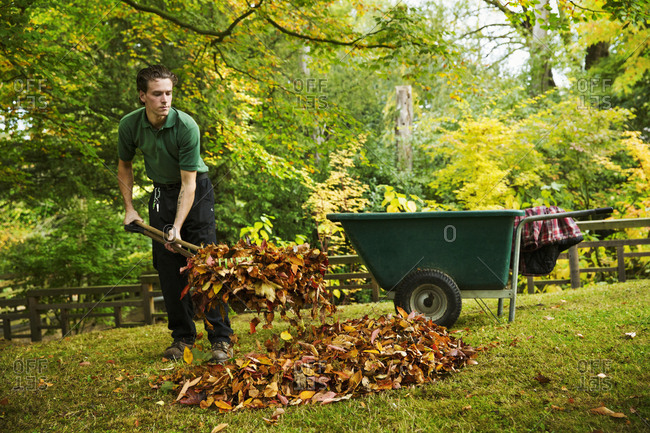 A gardener using a leaf blower to clear up autumn leaves in a garden.