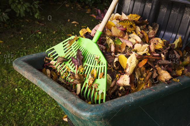 A rake and a bin of autumn leaves.