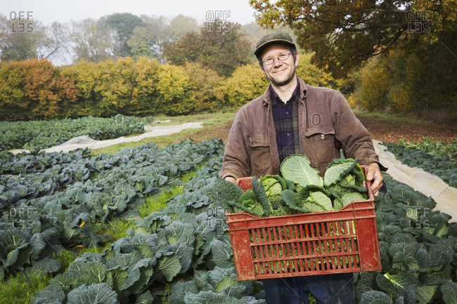 A man carrying a crate of fresh picked vegetables in a field.
