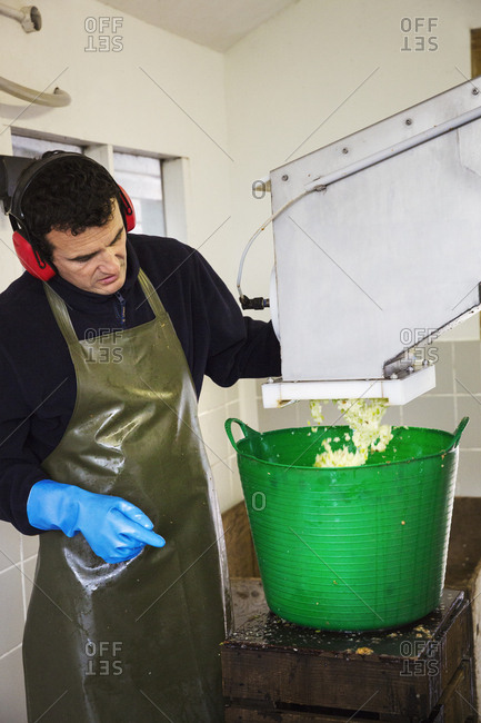 A man in apron and ear defenders watching the crushed apples coming out of the scatter machine into a bucket.