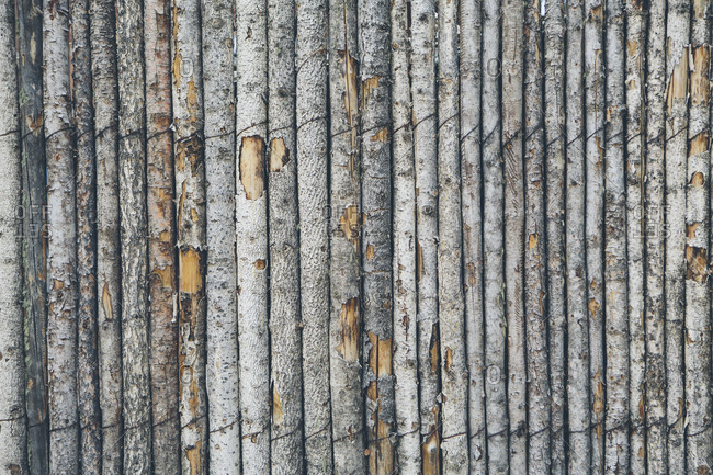 A fence made from tree trunks