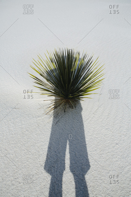 Photographer's self portrait and shadow on sand dune and yucca, White Sands National Park