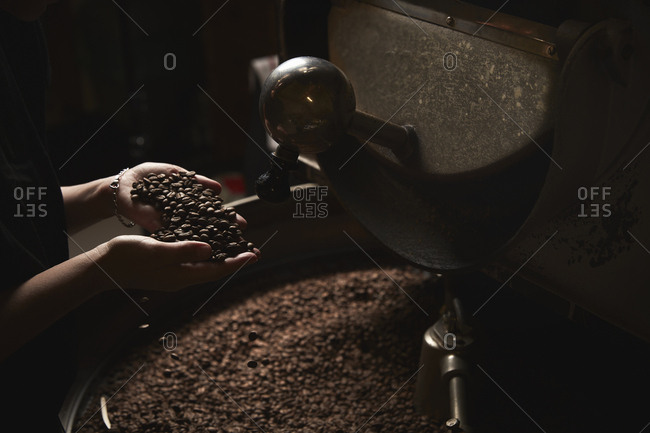 A coffee shop. A person holding a handful of fresh roasted beans above a metal drum full of coffee beans.