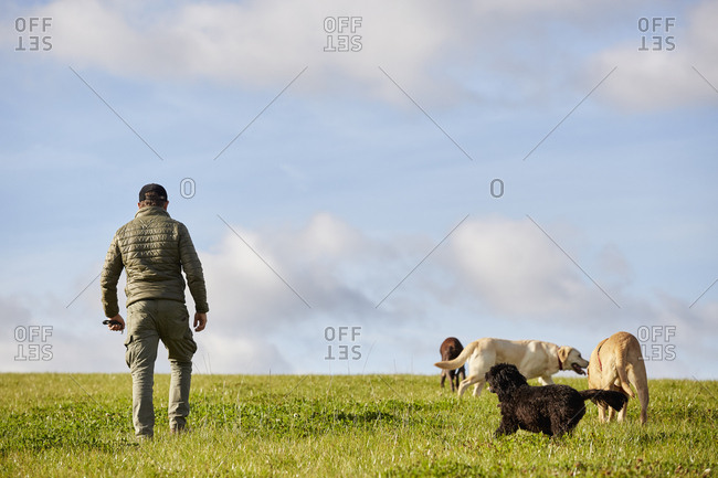 Dog walker walking across grass with four dogs.