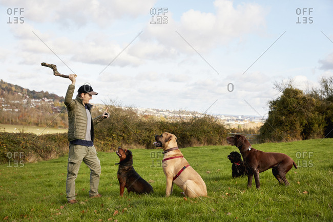 Dog walker, a man with his arm raised to throw a stick for three dogs.