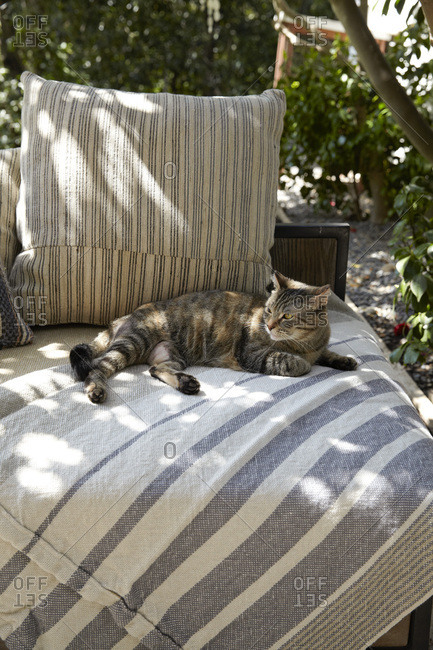 Cat lounging on outdoor couch in dappled light