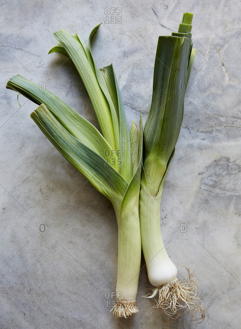 Two fresh leeks on grey stone surface