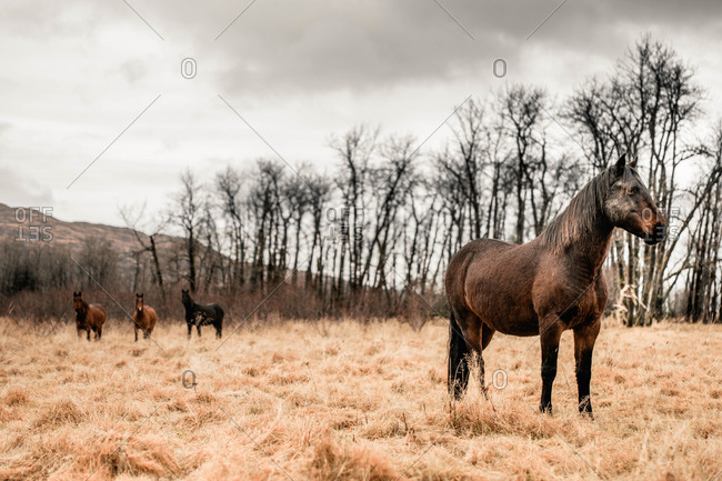 Horse standing in field with three others