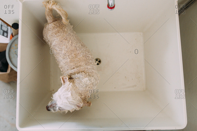 High angle view of dog getting a bath in a laundry tub