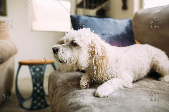 White wet on sofa after having a bath