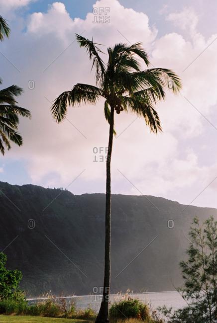 Mountainous shore in Hawaii
