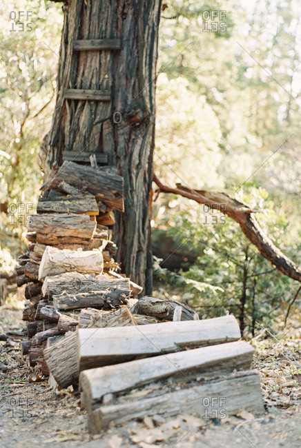 Firewood stacked by a tree