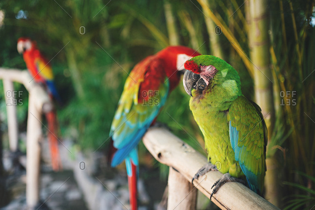 Parrots on perches outdoors, Mexico