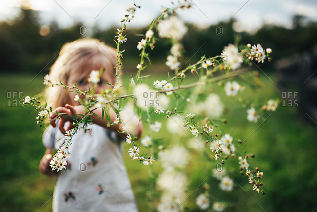 Girl holding wildflower branch in field